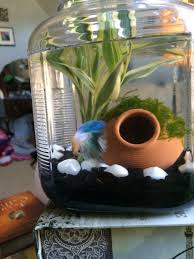 Homemade Lava Lamp Fish Tank by Using An Old Flour Jar For A Fish Tank Makes For An Elegant Betta