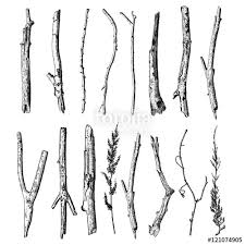 Set of detailed and precise ink drawing of wood twigs forest collection natural tree