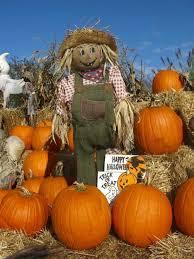 Pumpkin Picking Riverhead by Glover Farms U Pick Pumpkins Long Island Haunted Houses