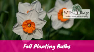 fall planting bulbs for east tennessee willow ridge knoxville