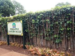 The Dole Plantation Home of the World s st Permanent Hedge
