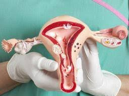 Uterus Lining Shedding Period by 100 Uterus Lining Shedding During Pregnancy 5 Prominent