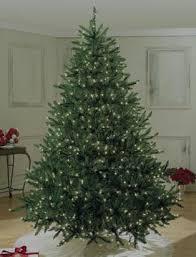 6 To 65 Christmas Trees