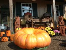 Pumpkin Patch Maryland by Home Of Showvaker U0027s Quality Evergreens And Cornfusion Corn Maze