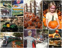 Johnson Brothers Pumpkin Patch Christmas Trees by Pumpkin Patch In Orange County Best Orange 2017