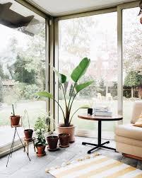 350 wohnen mit pflanzen ideen pflanzen zimmerpflanzen