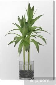 leinwandbild bambus pflanze in der vase isoliert auf weißem hintergrund