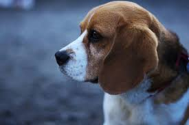 Small Dogs That Dont Shed Uk by Top 5 Best And Worst Dogs For Children Pethelpful