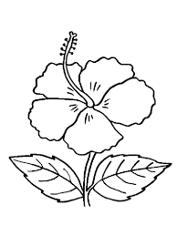 Hibiscus Flower Coloring Pages 11