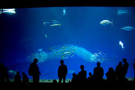 monterey bay aquarium outer bay open sea exhibit naturetime