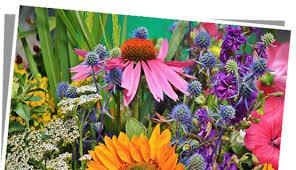 fleur et plante du lac fleurs et plantes du lac 28 images les fleurs et les plantes