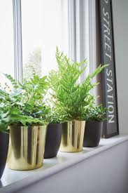 Best Plant For Bathroom Feng Shui by Bathroom Design Wonderful Good House Plants Uk Best Plants For