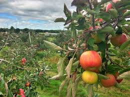 Hillcrest Farms Pumpkin Patch by Hillcrest Orchards In Amherst Offers Bushels Full Of Family Fun