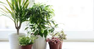 ungiftige zimmerpflanzen mein schöner garten