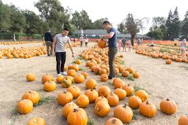 Livermore Pumpkin Patch Farm by Pumpkin Patch U0026 Corn Maze Danasaur Lui