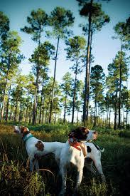 Bbq Pit Sinking Spring Death by Florida U0027s Hidden Spots Where To Get Lost U2013 Garden U0026 Gun