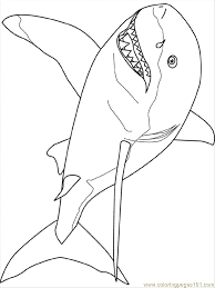 Amazing Great White Shark Coloring Pages 67 In For Adults With