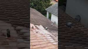 how to clean concrete roof tiles