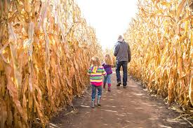 West Sacramento Pumpkin Patch by Seattle Corn Mazes And Pumpkin Patches