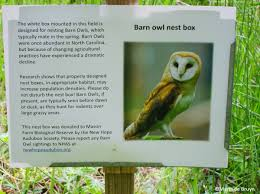Barn Owl | My Beautiful World Common Barnowl Tyto Alba Two Juvenile Common Barn Owls At The Pramo Clothing Owling In Owls Glenn County Resource Cservation District Barn Owl Nest Box Nhbs Wildlife Shop Gardening For Birds All About Nesting Logs And Boxes Hecker Nursery Triangular Girl Scout Gold Award Benefits Birds Burroughs Audubon Society Boxes Hungry Project Bbook Mount Gravatt Environment Group Wiggly Wigglers Duhallow Raptor Plans Vip