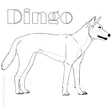 Dingo Drawing Coloring Page Printable Dingo Drawing Coloring Download Dingo Drawing Free Coloring Coloriage Dingo Australien
