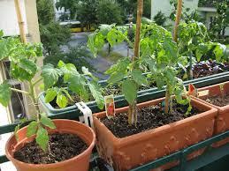 aménagez votre petit balcon en créant un environnement verdoyant