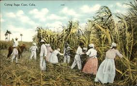 TO THE CANE FIELDS OF DOMINICAN REPUBLIC