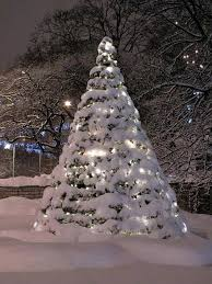 Beautiful Snow Covered Christmas Tree In Lights