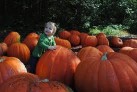 Burts Pumpkin Farm 2015 by Family In Atlanta Rubioswander