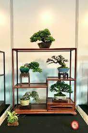 pin manoli auf bonsai asiatische dekoration