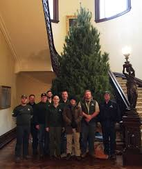 Christmas Tree Sapling Care by Independence Christmas Tree Lights Up Governor U0027s Lawn Missouri