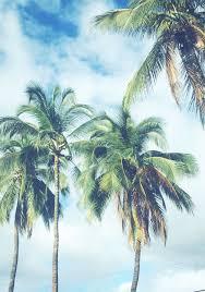 Drawn Palm Tree Summer Beach
