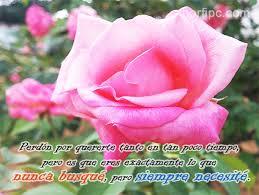 Siempre Te Voy A Querer Garden by Index Of Fotos Frases Amor