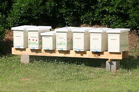 Packages Or Nucs -- Which Is A Better Start? Keeping Backyard Bees Hive Time Products A Bee Adventure For Everyone Bkeeping Everything You Need To Know Start Your First Best 25 Raising Bees Ideas On Pinterest Honey Bee Keeping The Bees In Your Backyard Guide North Americas Joseph Starting Housing And Feeding Top Bar Beehive Projects Events Level1techs Forums 562 Best Images Knees 320 Like Girl 10 Mistakes New Bkeepers Make Splitting Hives Increase Cookeville Bkeepers Nucleus Colony Or How A 8 Steps With Pictures