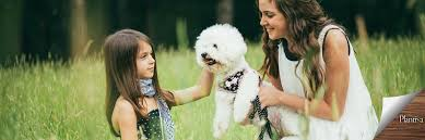 Hypoallergenic Dogs That Dont Shed Much by 7 Dogs That Don U0027t Affect Your Allergies So Much Plantiva