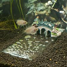 large aquarium rocks for sale underwater river aquarium decoration petsolutions