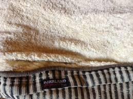 Kirkland Dog Beds by Pets Kirkland Dog Bed Review