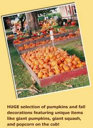 Southern Ohio Pumpkin Patches by Fleitz Pumpkin Farm In Oregon Ohio Offers Fall Family Fun With A