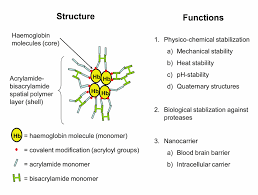 Structure And Functions Of Acrylamide Bisacrylamide Nano Layer On Single Protein Nanocapsules