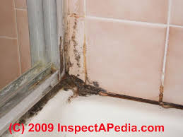 bathroom mold cleanup clean up tile grout joints remove bathroom