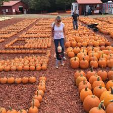 Burts Pumpkin Farm 2015 by October 2016 Hayes Everyday