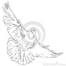 Flying dove pencil drawing photo 11