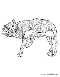 African Panther Online Coloring