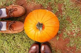 Apple Orchard Pumpkin Patch Sioux Falls Sd by 49 Best Pumpkin Patch Engagement Photo Ideas Images On Pinterest