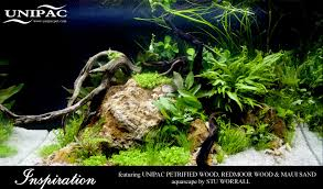 Home - Aquatic Substrates | Aquatic Decor | Aquarium Materials ... Aquascaping Fish Tank Projects Aquadesign George Farmers Live Aquascaping Event At Crowders Ipirations Mzanita Driftwood For Inspiring Futuristic Home Planted Riddim By Alejandro Menes Aquarium Design Contest Ada Horn Wood Beautiful Natural Hardscape For Superwens 2012 Aquascape Petrified Youtube Fish Aquariums The Worlds Best Planted Aquarium Products Designs Reviews Out Of Ideas How To Draw Inspiration From Others Aquascapes 7 Wood Images On Pinterest Sculpture Lab Tutorial Nano Cube Size 20 X 25h