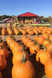 Oklahoma Pumpkin Patches by These Are The Best Pumpkin Patches In Every Southern State