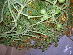 demonstrations atlantis hydroponics page 2