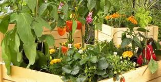 jardinières un balcón con huerto