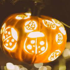 Best Pumpkin Patch Near Roseville Ca by Pumpkin Nights