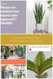 pflanzen im schlafzimmer gesund oder ungesund